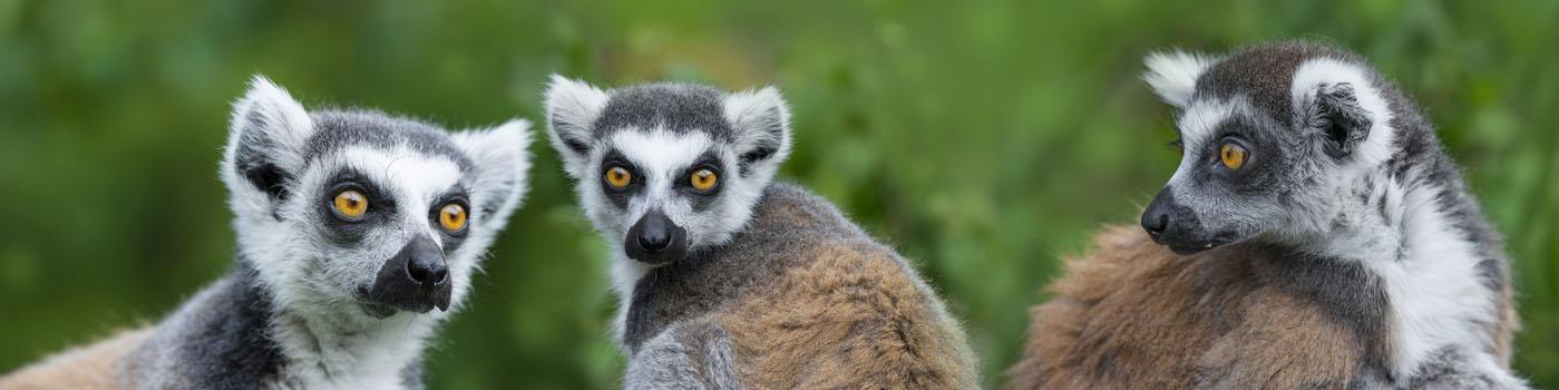 Steib-Pur-Reisen und Urlaub Individuell-Madagaskar